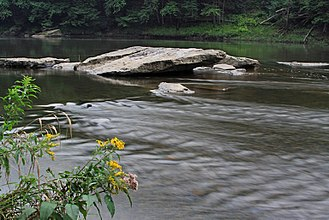 Clarion River - Clarion River in Cook Forest State Park