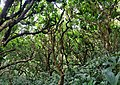 Cloud Forest, Narcondam Island.jpg