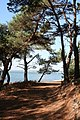 Coastal footpath on Brownsea Island - geograph.org.uk - 804641.jpg