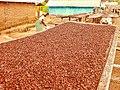 Cocoa beans drying Mpenkro 2014 B002a.jpg