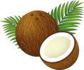 Coconut Clipart Cartoon.png