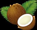 Coconut Clipart Cartoon.png