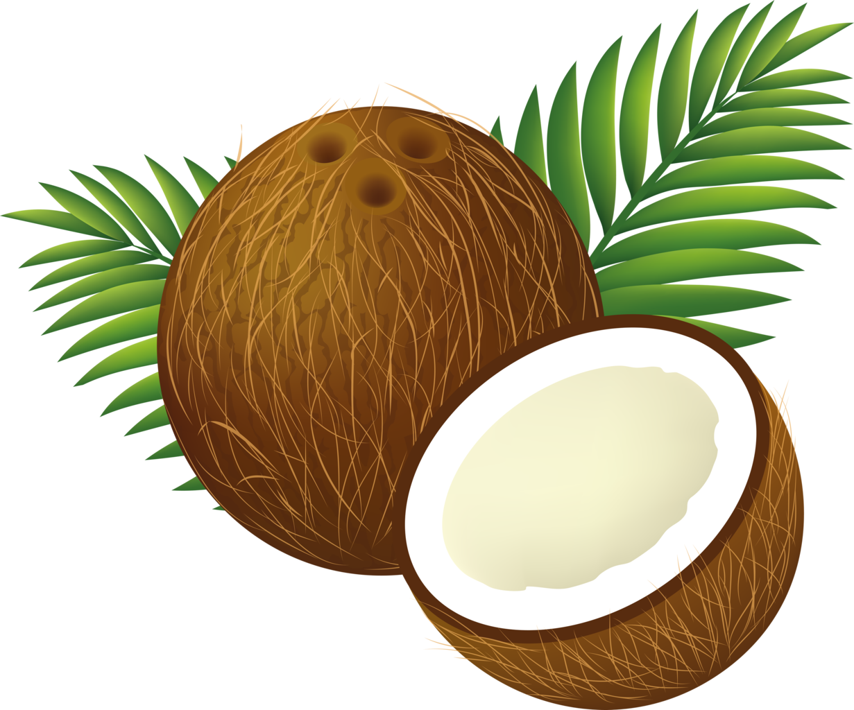file coconut clipart cartoon png wikimedia commons rh commons wikimedia org coconut clipart png coconut clipart free download