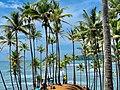 Coconut tree hills.jpg