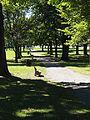 Colchester Village HD - Colchester Green.jpg
