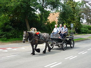 Coll PK-002 Opgetuigd Belgische paard P1040063