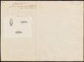 Coluber ornatus - kop - 1837 - Print - Iconographia Zoologica - Special Collections University of Amsterdam - UBA01 IZ12000138.tif