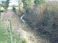 Cotton Mill Dyke - geograph.org.uk - 649522.jpg