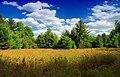 Cranberry Swamp Natural Area (16) (17481674133).jpg