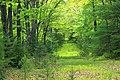 Cranberry Swamp Natural Area (9) (17906448920).jpg