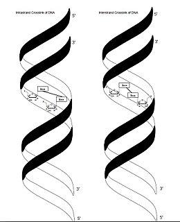 Crosslinking of DNA