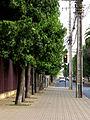 Curico, calle Yungay (17003201072).jpg
