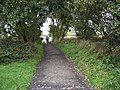 Cyclist with dogs - geograph.org.uk - 71664.jpg
