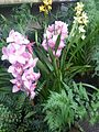 Cymbidium cultivars - kew 2.jpg