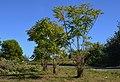 Dénia, arbres pudents per la Fredat.jpg