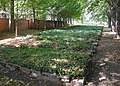 DD-Neuer-Annenfriedhof-08.jpg