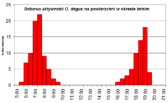 Daily acivity of O. degus in summer.png