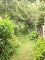 Daisy-strewn Path - geograph.org.uk - 1748768.jpg