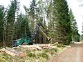 Dalreoch Wood, timber harvesting - geograph.org.uk - 856485.jpg