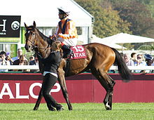 Danedream prior to winning the Prix De Larc Triomphe.jpg