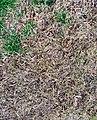 Dead Yellow Grass Texture.jpg