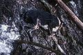 Dead dog Nye Mountain crash 25 12 78 Cris Claxton Ray.jpg