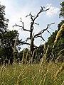 Dead tree, Tidbury Ring, Tunworth - geograph.org.uk - 195833.jpg