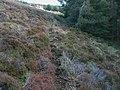 Deer tracks on forest edge near Monluth Hill - geograph.org.uk - 1544565.jpg