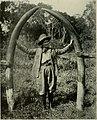 Delia Akeley with elephant tusks.jpg