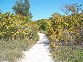 Delnor-Wiggins SP path02.jpg