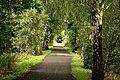 Derwent Walk and Cycleway, Priestfield Wood - geograph.org.uk - 249155.jpg