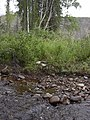 Dewey Creek Water Quality Testing, Yukon-Charley Rivers, 2003 (3824e6e7-b2f8-4905-884a-cb63dd99ef72).jpg