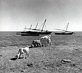 Dhows and Goats by Contributed By Grady Gaston Early 89 629.jpg