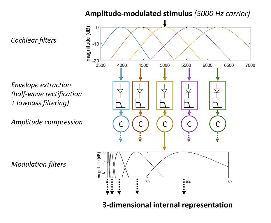 930px Diagram_of_the_envelope_perception_model file diagram of the envelope perception model jpg wikimedia commons