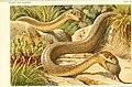 Die Reptilien und Amphibien mitteleuropas (1912) (20932754572).jpg