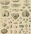 Die Versteinerungen des rheinischen Schichtensystems in Nassau. Mit einer kurzgefassten Geognosie dieses Gebietes und mit steter Berücksichtigung analoger Schichten anderer Lander (1850) (14597685577).jpg