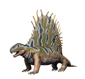 Dimetrodon - Restoration of D. giganhomogenes with exposed neural spine tips