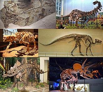 Dinosaur - Image: Dinosauria montage 2