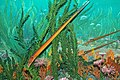 Diorama of a Cincinnatian seafloor (Late Ordovician) - nautiloids, crinoids, algae 2 (43799099560).jpg
