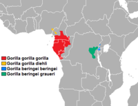 Área de distribución do gorila occidental das chairas (en cor vermella).