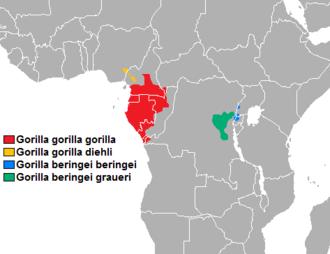 Cross River gorilla - Image: Distibución gorilla