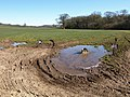 Dog in puddle near Wells - geograph.org.uk - 1843892.jpg