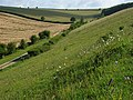 Downland, South Newton - geograph.org.uk - 490587.jpg