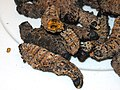 Dried, cooked Mopane worms.jpg
