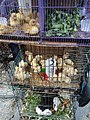 Ducks, chicks, and guinea pigs in Jatinegara Market.jpg