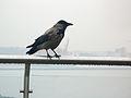 Duran kuş 2.JPG