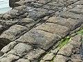 Eaglehawk Neck tessellated pavement 20201115-015.jpg