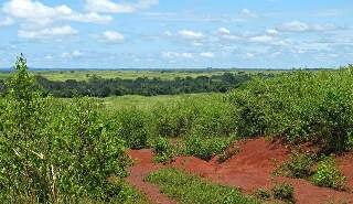 East - Guinean Savanna 001