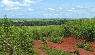 East Region (Cameroon) - Guinean savanna near Bertoua