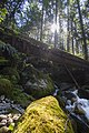 East Fork Foss River flowing under Bridge, Mt Baker Snoqualmie National Forest (31301702613).jpg